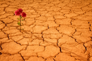 flower-in-desert