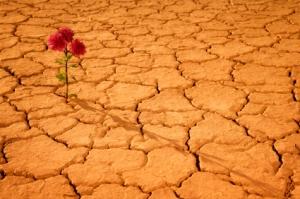 flower-in-desert